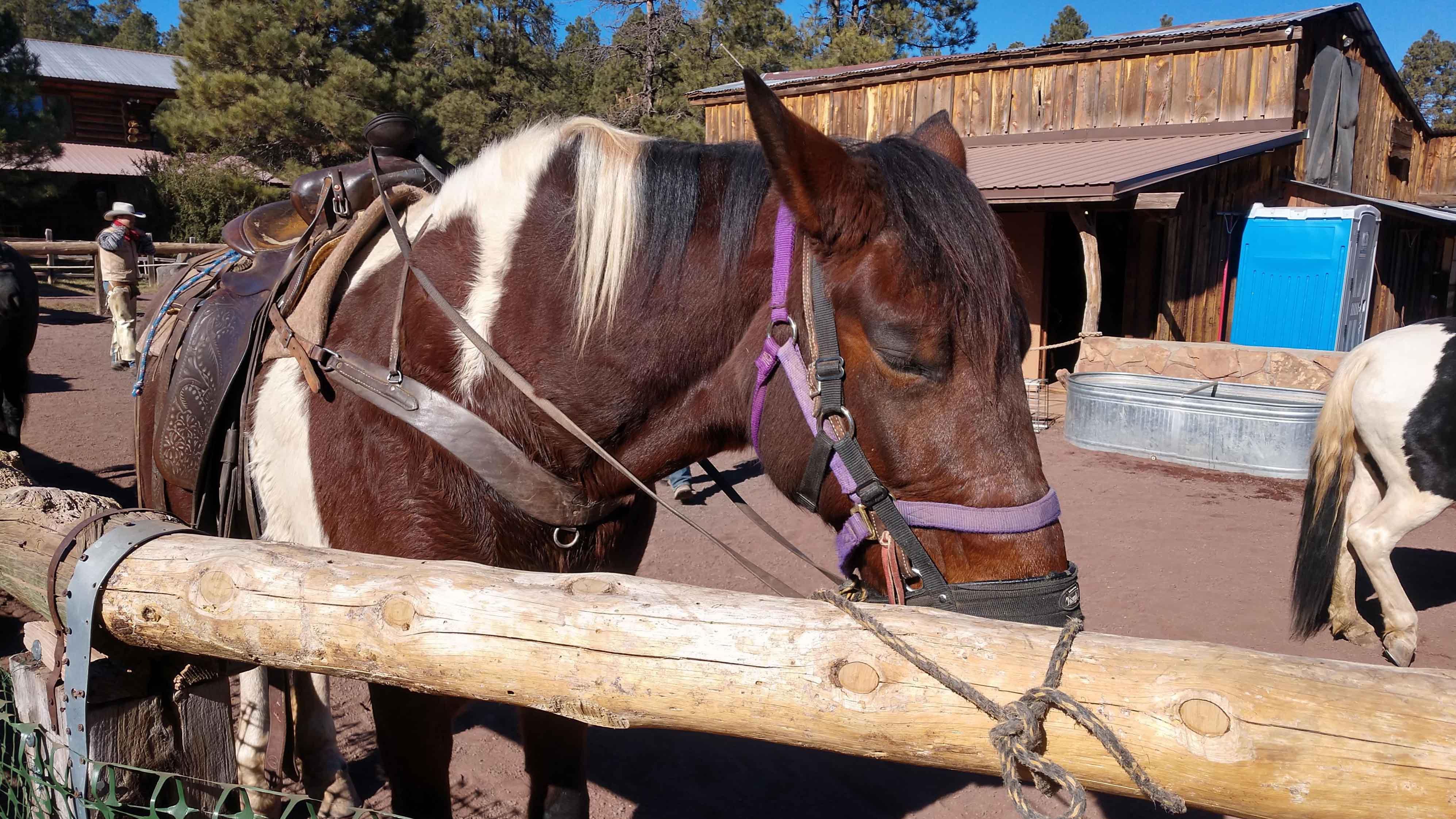 アメリカ フラッグスタッフ 乗馬トレイル Historic Hitchin Post Stables